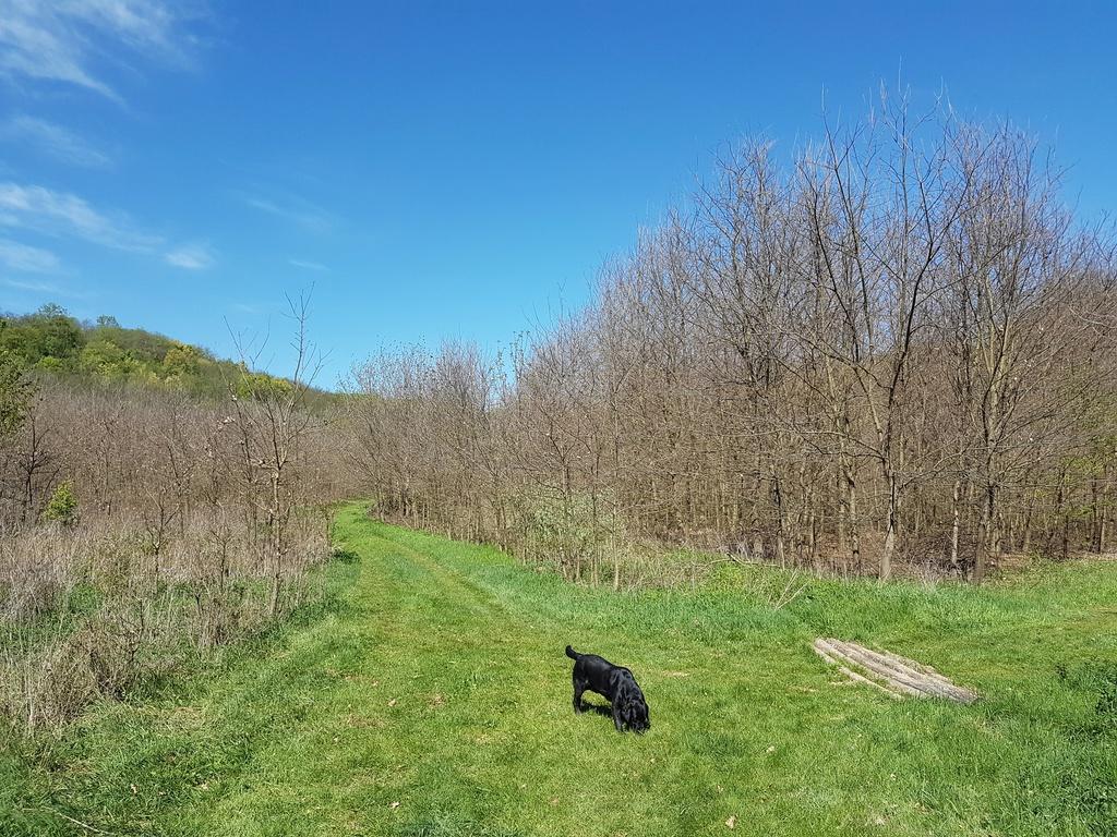 szarvasgomba ültetvény szarvasgomba termesztés, erdőtelepítés
