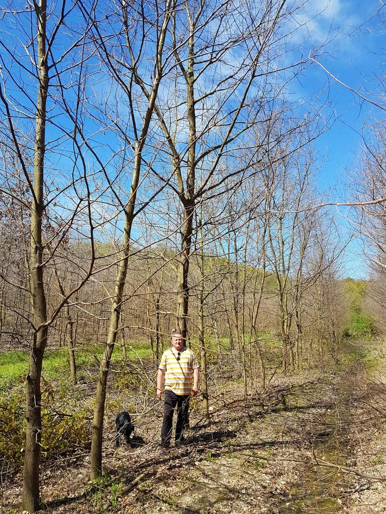 Szarvasgomba ültetvény - szarvasgomba termesztés, erdőtelepítés