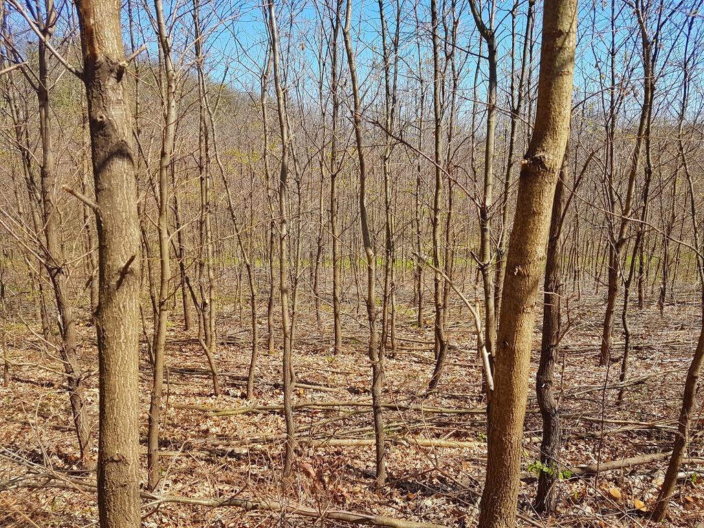 szarvasgomba termesztés - szarvagomba ültetvény - mintaerdő 7